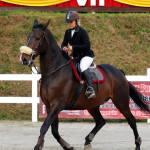 Jeździec na koniu podczas zawodów