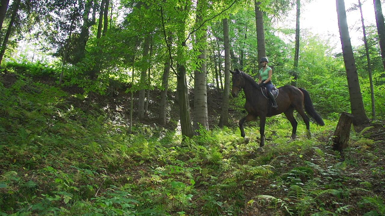 Jazda konna przez las