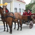 Bryczka na wesele, ustrojone konie